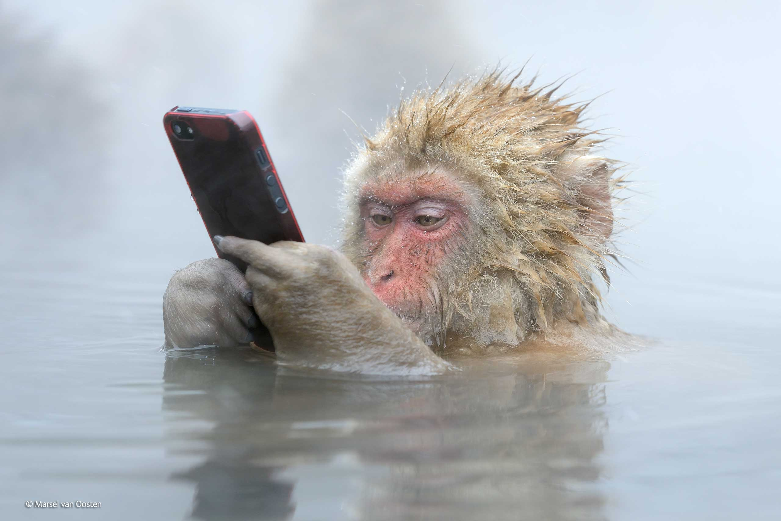 monkey with iphone
